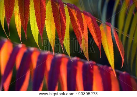 Autumnal colorful plants outdoors