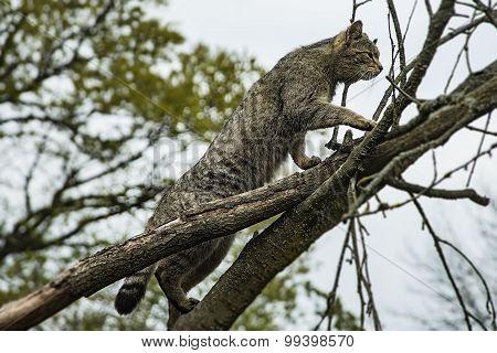 Wildcat Climbing
