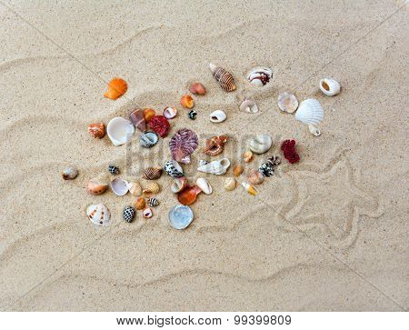Colorful shells on beach with star