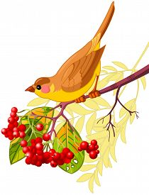 stock photo of mountain-ash  - Cute bird sitting on mountain ash branch - JPG