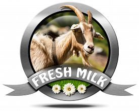 pic of goat horns  - Metallic round icon or symbol with head of goat with horns text fresh milk and three daisy flowers - JPG