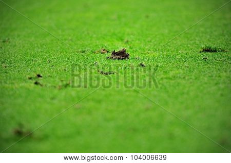 Damaged Turf