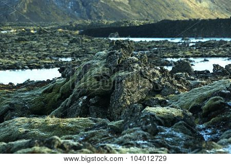 Green Moss On Volcanic Rocks In Iceland