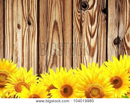 Grunge background - wooden texture and border with yellow sunflowers