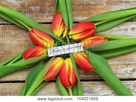 Have a  nice day card with red and yellow tulips