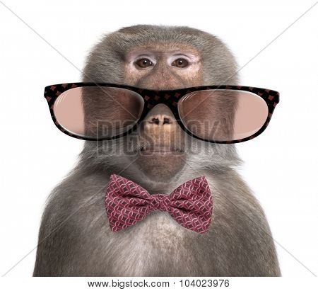 Baboon wearing glasses and a bow tie  in front of a white background
