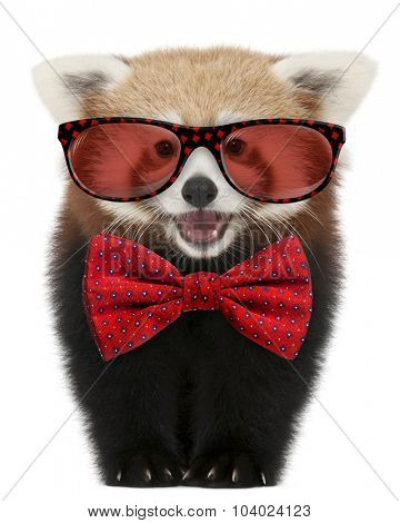 Young Red panda wearing glasses and a bow tie in front of white background