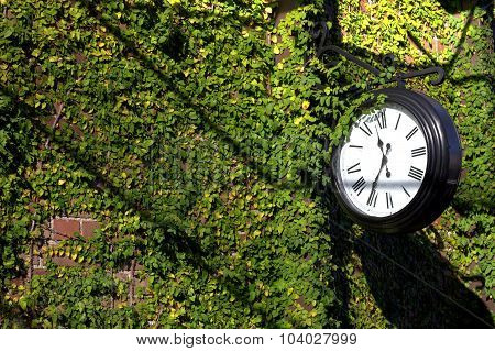 Clock on ivy covered wall