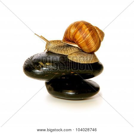 Snail on  spa  stone isolated on white .