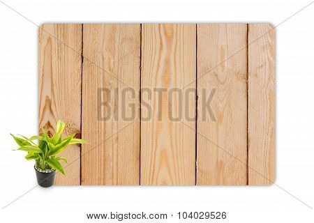 Yucca In The Small Pots On Wood Texture Background.