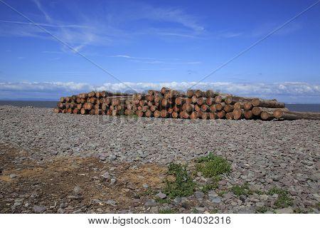 A Log Woodpile On A Beach