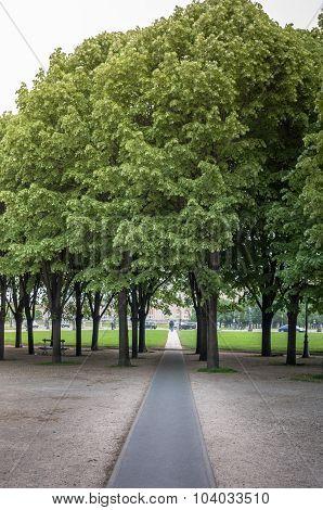 Black Walkway Through Grop Of Trees