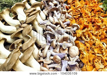 Close up of harvest of chanterelles pied bleu and king oyster wild mushrooms after wild food