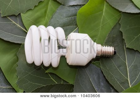 Energy Saving Light Bulb On Green Leaves