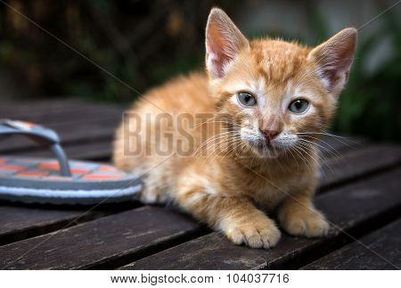 Cat Cub On Wood