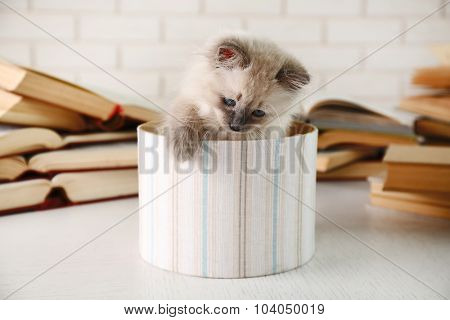 Cute little cat in box near books on light background