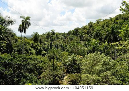 Tropical rainforest (Soroa, Cuba)
