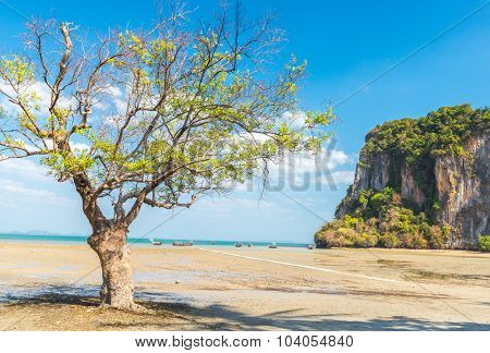 low tide at East Railay beach, one of the most popular rock climbing locations in Asia. Railay, Krabi, Thailand