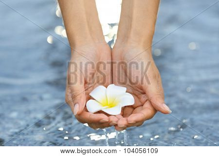 Female hands holding flower and touching water