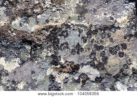 Gray Rock Surface With Lichen