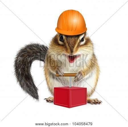 Funny Animal Chipmunk With Detonator And Hard Hat, Demolition Concept