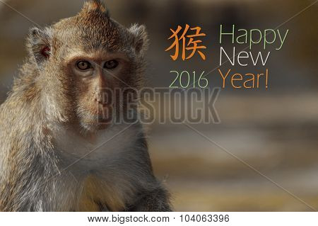 New Year 2016 Card With Portrait Of Monkey With Blur Background, Copy Space And Chinese Hieroglyph F