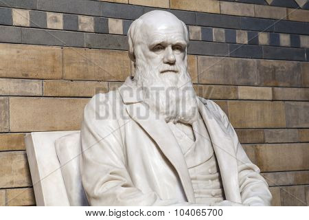 Charles Darwin Statue In The Natural History Museum