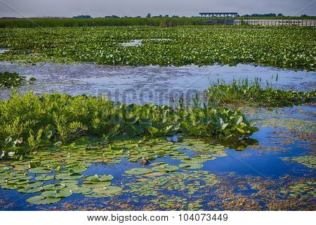Marsh area in Point Pelee National Park, Ontario, Canada