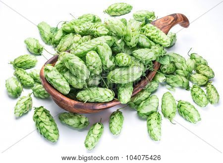 Hop cones in the wooden bowl. Isolated on the white background.