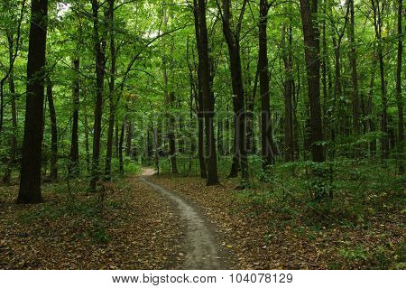 Trees in a green forest