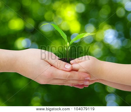 hands of a child taking a plant from the hands of a mother