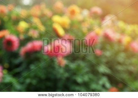 Blurred flowers background