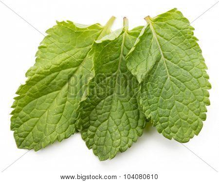 three fresh mint leaves isolated on white background. Studio macro