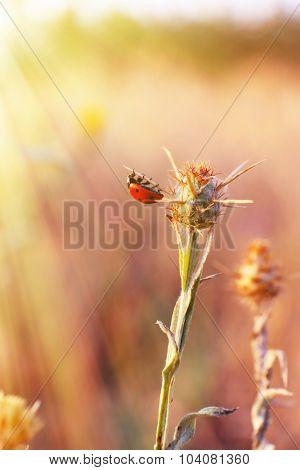 Wild flowers in field with sunlight