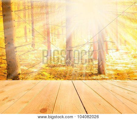 Sunlight in autumn forest. Nature background