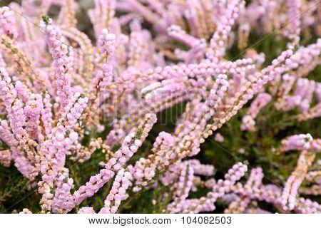 Garden flowers, close-up