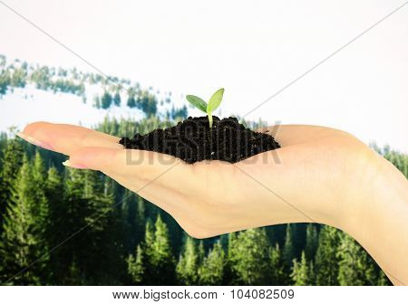 Female hand with soil and green plant on nature background