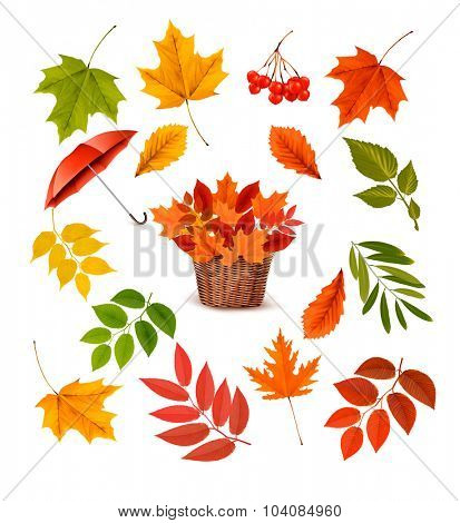 Set of colorful autumn leaves and objects. Vector illustration.