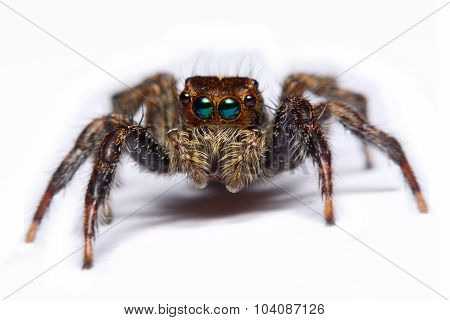 Close-up Of A Jumping Spider.