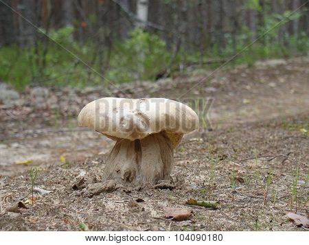 mushroom in the middle of road