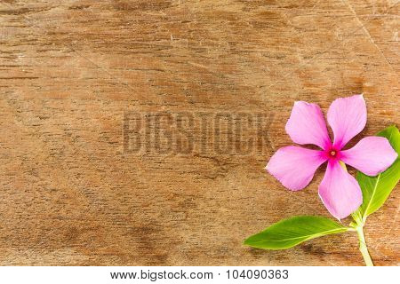 Vinca Flower On Wood Board Background