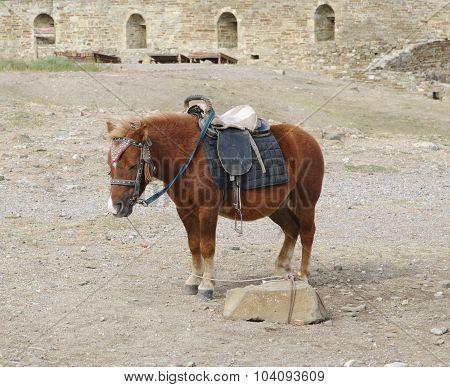 little pony brown suit