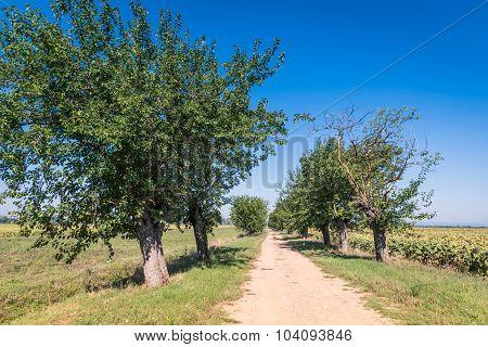 The Green Countryside In Cortona, Tuscany