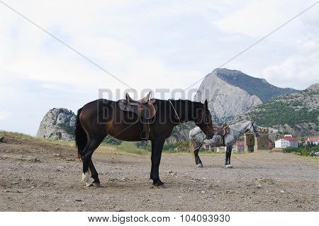 horses in harness for riding