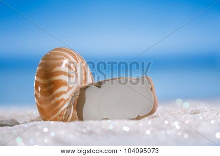 sea glass seaglass with shell on glitter sand with ocean , beach and seascape, shallow dof