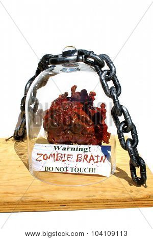 GENUINE ZOMBIE BRAIN on display under a glass bell jar with a steel chain locking it down, with a Warning Sign. Warning ZOMBIE BRAIN Do Not Touch. Zombies are known for being undead and eating brains
