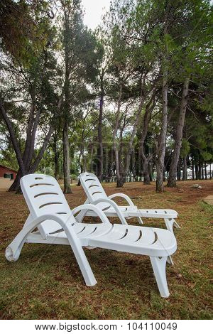 Loungers In The Pine Grove