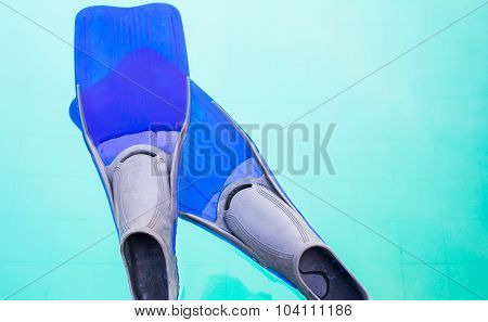 Fins Or Flippers