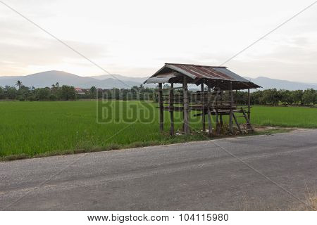 Old Cottage In The Rice Fields With Mountain