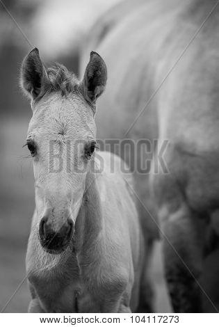 Newborn Foal